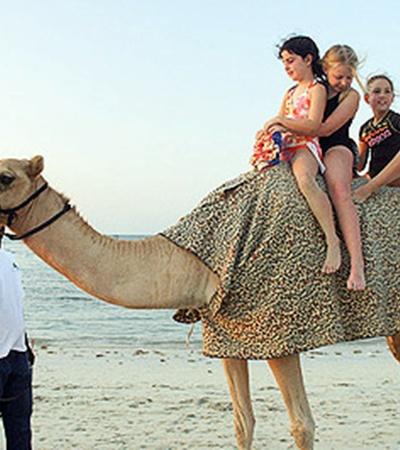 Одногорбые верблюды-драмадеры - самые почитаемые животные у местных жителей.