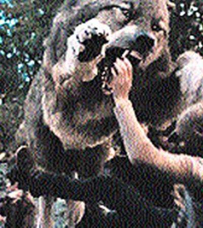 В «Сумерках-3» вампиры всерьез сцепились с оборотнями - их главными конкурентами в сердцах современных зрителей.