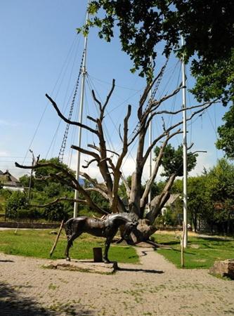 Запорожский долгожитель стал лучшим среди пяти легендарных деревьев страны.