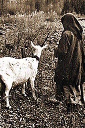Вспоминаю, как везли сюда трех коз, как учились доить их. Позже Агафья не один раз вспоминала: «Коз бог нам послал». За двадцать шесть лет сменилось более двадцати коз. А козла только три раза меняла…