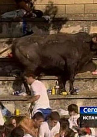 Один из каскадеров даже пытался оттащить быка за хвост.