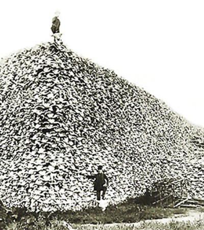 Черепа американских бизонов, уничтоженных в XIX веке, - апофеоз бессмысленных грядущих войн с парниковым эффектом.