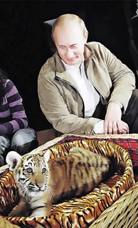 Самым необычным подарком Путину стал уссурийский тигренок.
