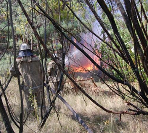 На территории лесничества по официальным данным в августе сгорело около 500 гектаров деревьев.