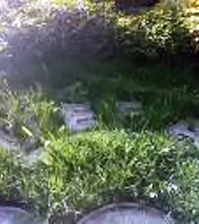 Траву на клумбе давно не стригли.