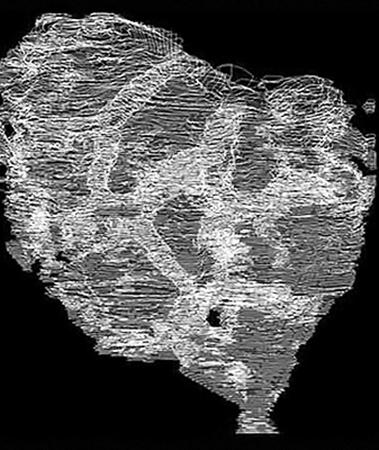 Первое существо на Земле пронизано странными каналами диаметром в 1 миллиметр.