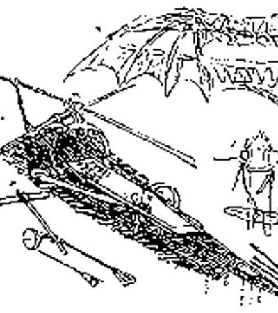 Орнитоптер Леонардо да Винчи, не летал.
