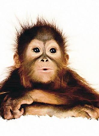 Приматы «подарили» нам апноэ - остановку дыхания во сне...