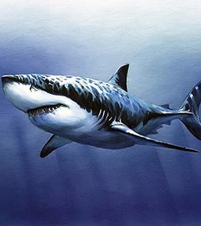 ...а акулы - грыжи.
