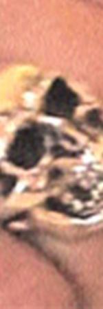 Массивный серебряный череп (3) - тайный знак от Буша?