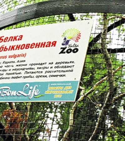 Как говорил Козьма Прутков: «Если на клетке буйвола увидишь надпись «Слон», не верь глазам своим! Вот и Т. Голубева из Полоцка сомневается, что увиденная ею в Ялтинском зоопарке «белка» действительно обыкновенная белка.