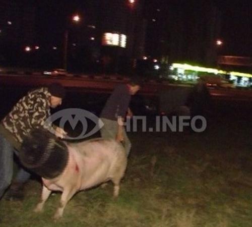 Выжившие животные разбежались кто куда. Фото с сайта magnolia-tv.