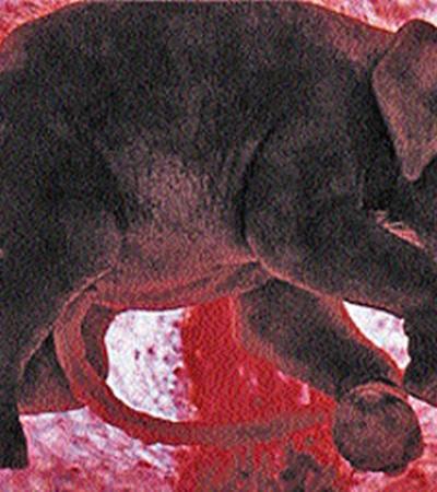Слоненок, связанный пуповиной с сокровенным внутриутробным миром.