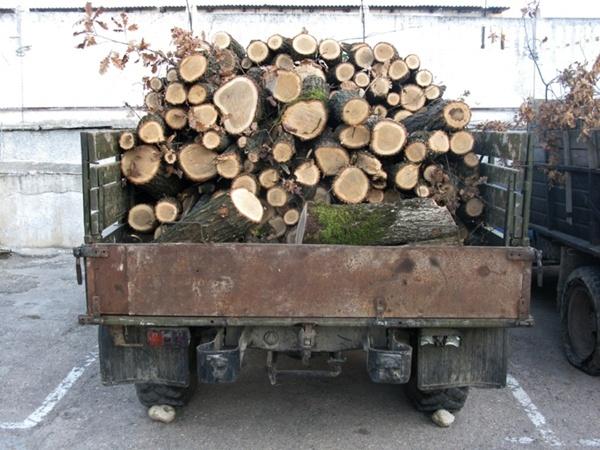 Изъятый ГАЗ-66 с ворованной древесиной. Фото пресс-службы Рескомлеса АРК