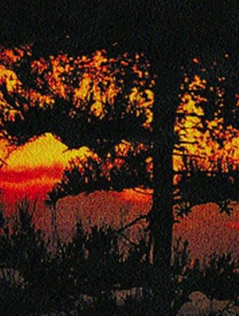 С восходом солнца страсти вокруг филина нарастают…