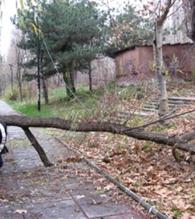 Фото автора. Прихожие называют этот тротуар «полосой препятствий»