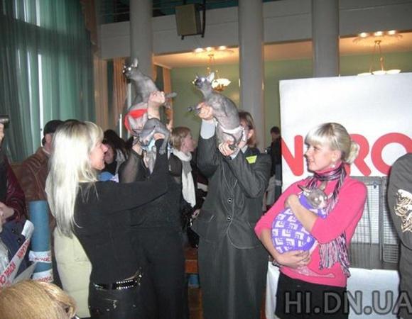 Сфинксы в трусах замаскировались под группу «Виагру». Фото: hi.dn.ua.