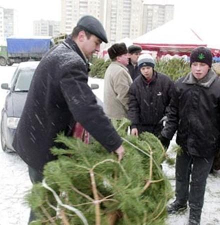 Елочные базары будут контролироваться экологической милицией. Фото из архива «КП».