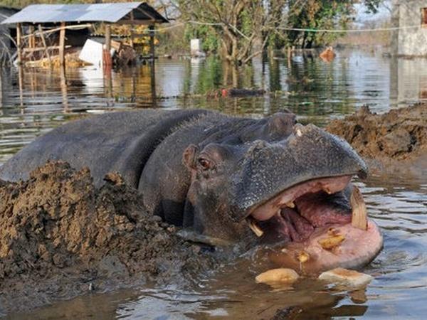 Во время наводнений Никица регулярно оставляет свое жилье и
