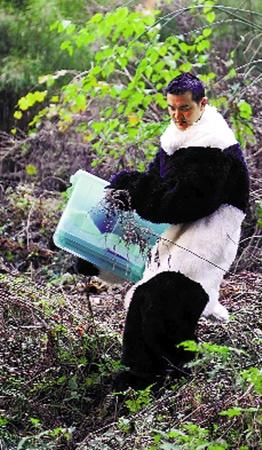 Теперь смотрители зоопарка, прежде чем выйти к медведям, наряжаются в теплые черно-белые шубы.