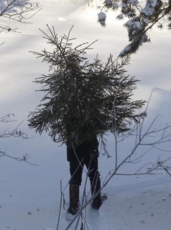 Чтобы не начать новый год со штрафов, елочку лучше купить. Фото с сайта www.s47.radikal.ru