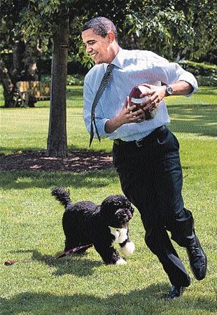 Барак Обама приобрел антиаллергенную собаку и назвал ее Бо.