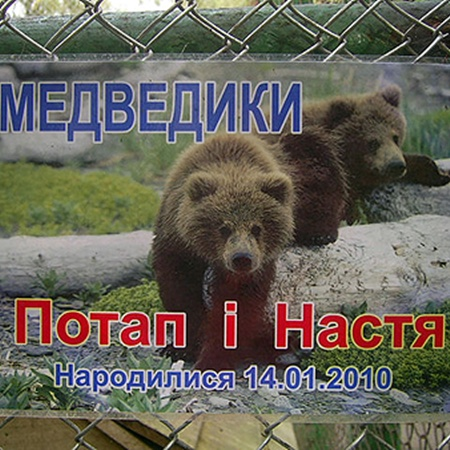 Такое фото висит на вольере медвежат.