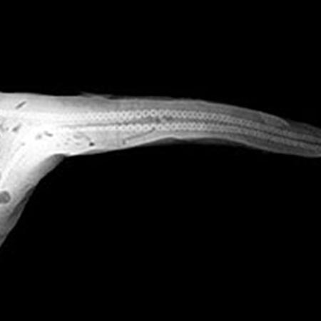 Реальная двухголовая акула, тайно хранившаяся в одной из часных коллекций.