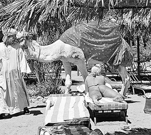 Спокойных уголков на египетских курортах все меньше...