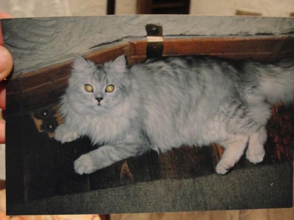 ... а вот прижизненное фото котика - уже настояший раритет.