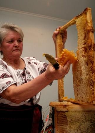 В Донецке пчеловоды проведут олимпиаду. Фото: www.62.ua.