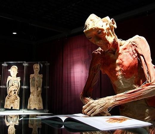 На выставке можно узнать все о строении человека. Фото с сайта nasha.lv.