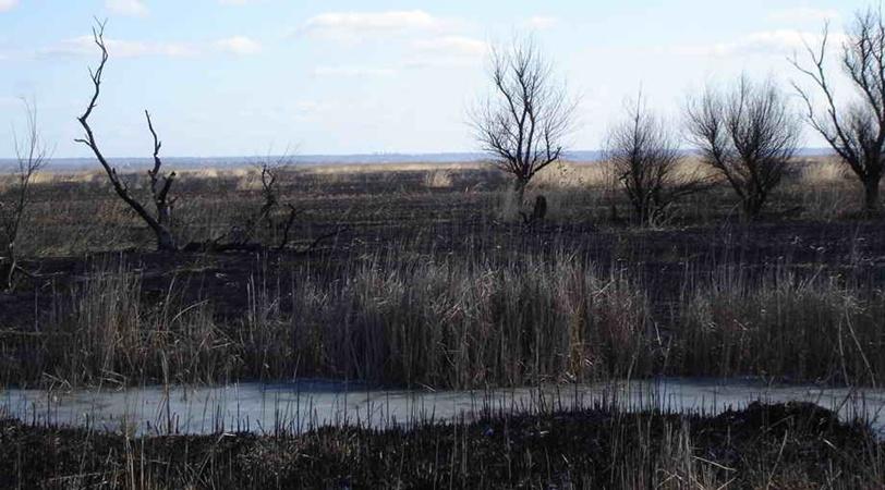 По официальным данным, площадь первого пожара составила более сотни гектаров уникального пойменного луга