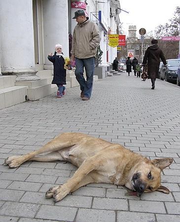 Труп собаки на площади Лазарева в центре Севастополя. Фото с сайта nr2ru