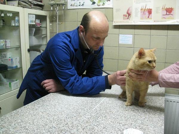 Андрей Курач лечит котят, мартышек и крокодилов.