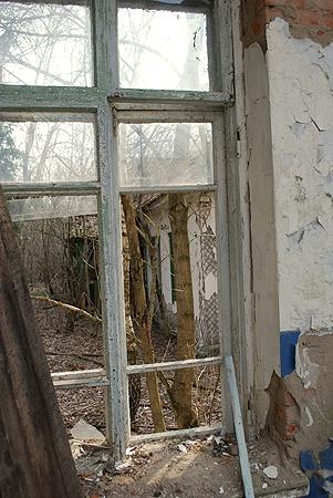 В вымершие села на севере Житомирской области до сих пор заходить опасно. «Фонят» и стены, и бурьян, которым заросли развалины. А в грибах и ягодах окрест показатели радиации превышают норму, бывает что и в 25 тысяч раз.