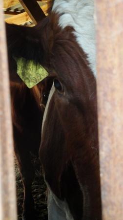 Бойня в Бахчисарае. Там забивают молодых бычков, дойных коров и лошадей. Фото предоставила Мария Поддубная.
