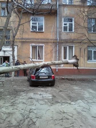 Штормовой ветер свалил дерево на авто. Фото: 0629.