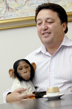 Где бы Александр Фельдман ни появлялся с обезьянкой, везде производит фурор,говорят в его окружении. Фото из личных архивов хозяев животных.