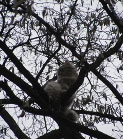 Кот не реагировал на «кис-кис», а когда начинали стучать по дереву, он еще больше пугался и лез еще выше.Фото: www.vp.donetsk.ua.
