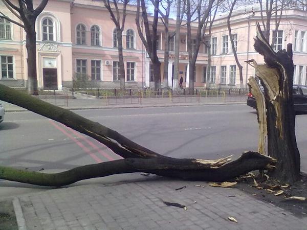 Ветер ломал деревья. Фото автора.