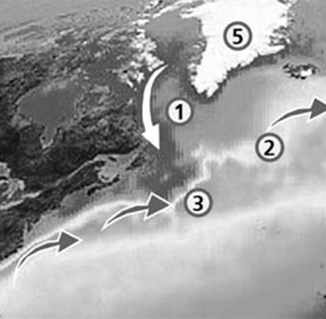 1. Холодное Лабрадорское течение. 2. Теплый Гольфстрим. 3. «Язык» Лабрадорского течения, который уже начал перекрывать Гольфстрим. 4. Северная Европа. 5. Гренландия. 6. Северная Америка.