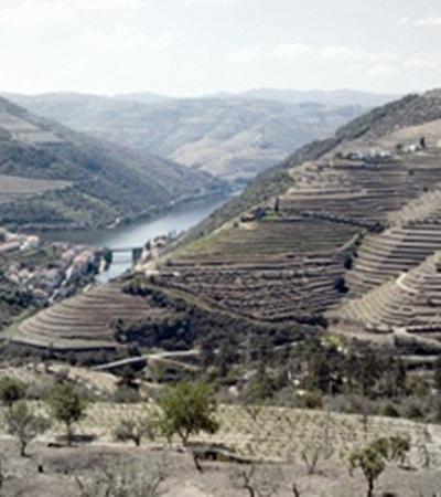 На зеленых берегах реки Дору растет будущий портвейн.