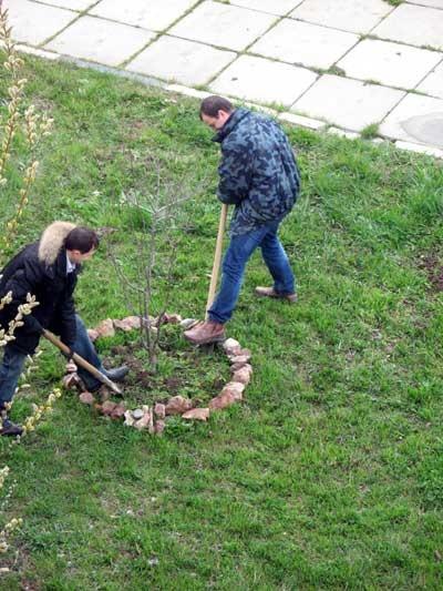 14 платанов, верба и небольшой розарий разместились вдоль дорожки к управлению Госгорпромнадзора