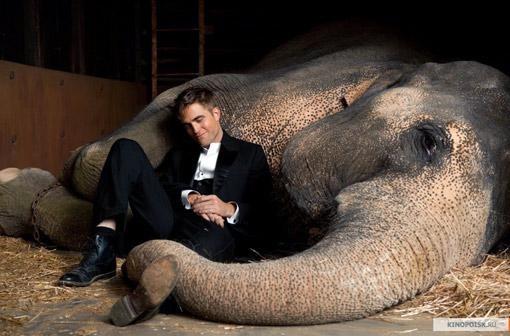 ЦИТАТА: - Не уверен, что я выбрал цирк. Похоже, это он выбрал меня…