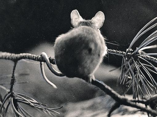 Мышь спасается на ветке.