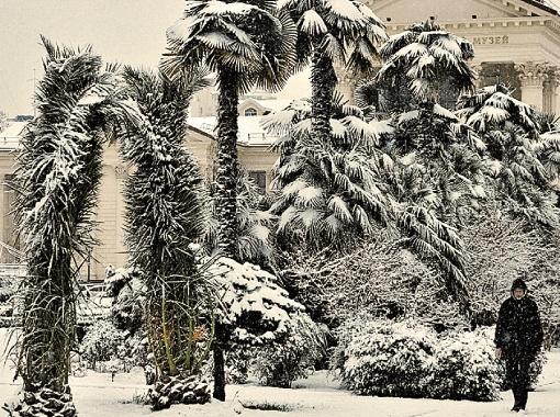 Пальмы в снегу. В Греции и Турции видят такое нечасто. Фото PHOTOXPRESS.