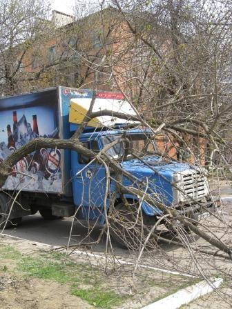 Дерево упало из-за своей старости. Фото: 06242.
