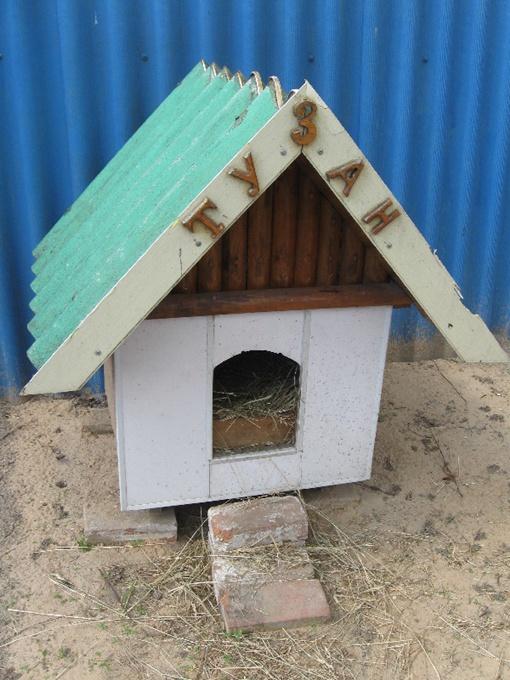 В будке для Тузана курица несет яйца