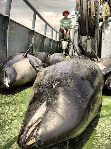 В этом году это первый случай такого массового мора млекопитающих.